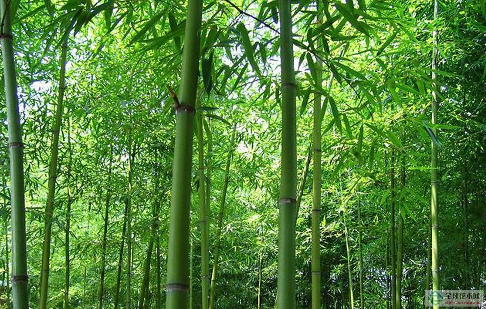竹中原娱乐城网址是几多