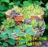 供应上海园林景观设计规范|杭州园林景观设计规范|南