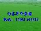 供应天堂草坪,百慕大草坪,狗牙根草坪电187960