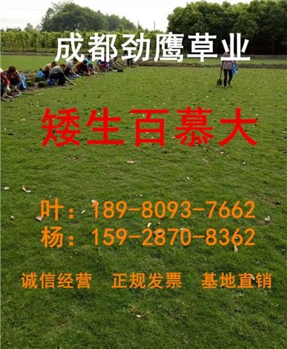 成都台湾二号供应商|成都台湾二号基地|成都优质台湾二号价格|劲鹰供