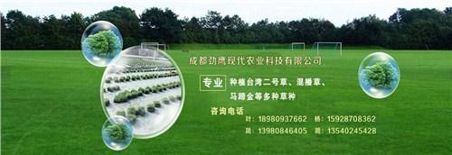 涪陵区四秀青草坪|涪陵区优质草坪零售|涪陵区草坪商|劲鹰供