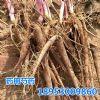 供应药用芍药、赤芍 白芍种苗、菏泽种植基地