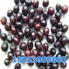 供应芍药种子,赤芍种子,白芍种子,菏泽芍药基地