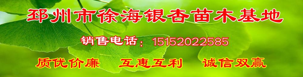 邳州市徐海银杏苗圃场